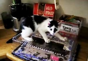 ケーキにたどり着けない猫