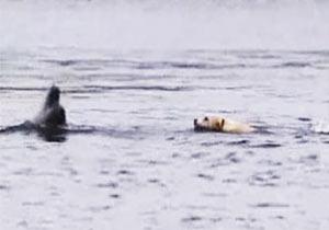 犬とイルカの交流