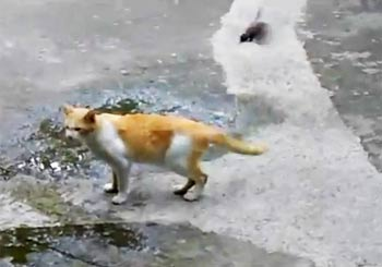 鳥の攻撃に全く動じない猫