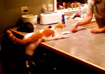猫のエサ当てゲーム