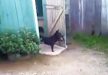 門番を務める犬