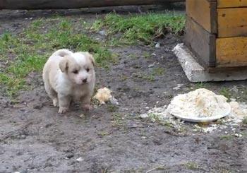 エサを守る子犬