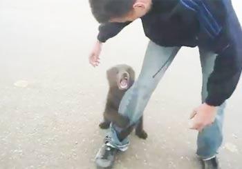 人懐っこい小熊