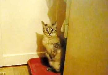 恥ずかしくなった猫