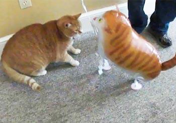 猫VSバルーン猫