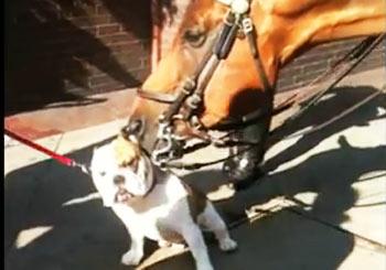 馬にペロペロされる犬