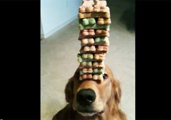 犬のおでこにビスケット