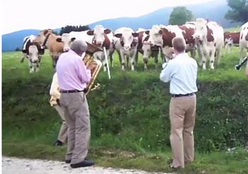牛へ捧ぐジャズ