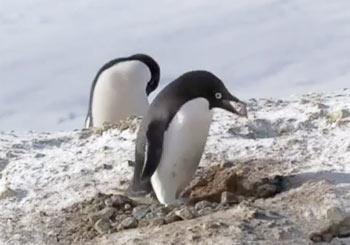 こそ泥ペンギン