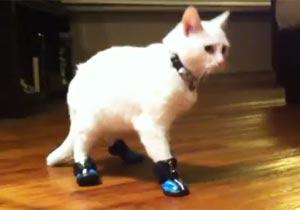 靴をはいた猫