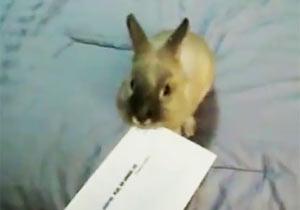 ウサギが開封