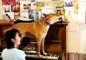 ピアノを弾き歌う犬