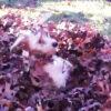 落ち葉に埋もれる犬
