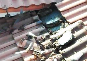 屋根瓦にコウモリ