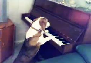 ピアノを弾く犬