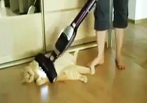 掃除機に吸われる猫