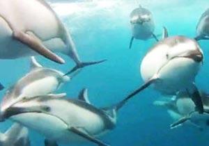 水中カメラで撮影したイルカの群れ