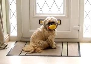 郵便物をまき散らす犬