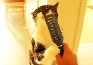 自らブラッシングする猫