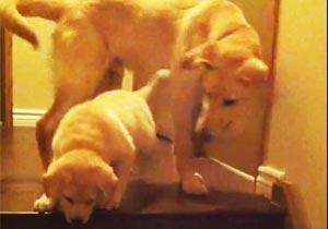 子犬に階段の下り方を教えるワンコ