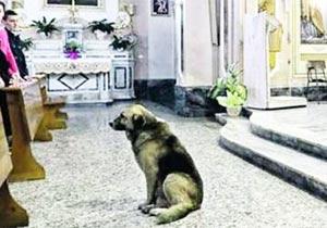 飼い主亡き後も教会通いする犬