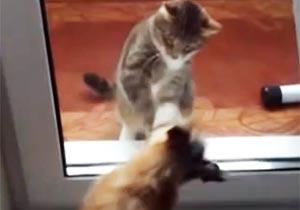 ガラス越しに戦う猫と犬