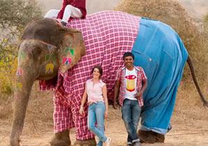 ジーンズをはいた象