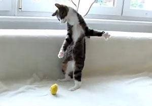 うっかりビヨンビヨンしちゃう猫