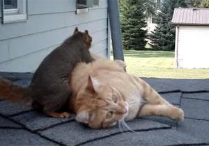 全身で触れ合う猫とリス