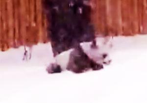大雪に大興奮の子パンダ