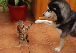 遊びたい犬と理解不能な猫