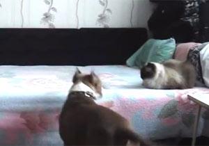 飼い主の居ぬ間にヒャッハーする犬