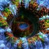 神秘的なサンゴの動き