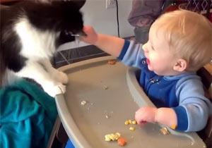 猫にごはんを奪われる赤ちゃん