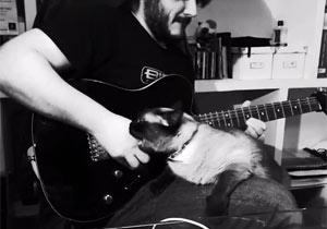 ギタープレイの邪魔しまくりな猫