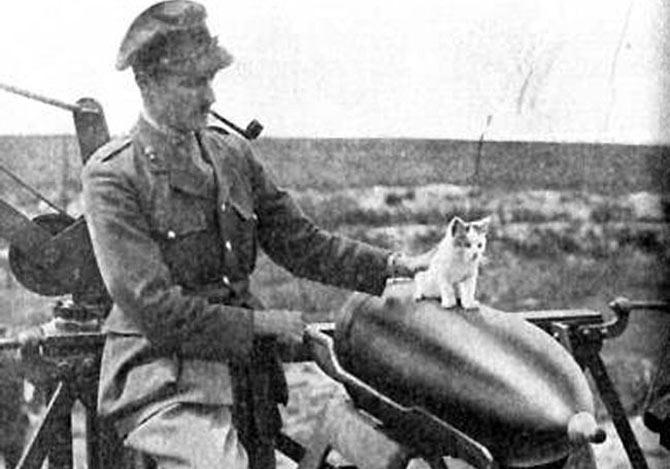 第一次世界大戦と猫